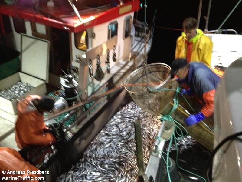 LL 12 Nephrops på skarpsillsfiske